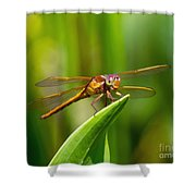 Multicolored Dragonfly Shower Curtain