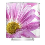 Mums Flowers Against A White Background Shower Curtain
