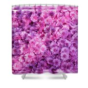 Mums In Purple - Featured In 'comfortable Art' And 'nature Photography' Groups Shower Curtain