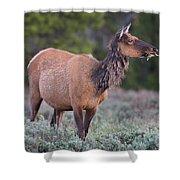 Munching Elk Grand Teton National Park Shower Curtain