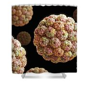Murine Polyomavirus Shower Curtain