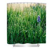 Muscari Or Grape Hyacinth Shower Curtain