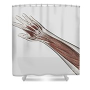 Muscle Anatomy Of Human Arm And Hand Shower Curtain