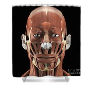 Muscles Of The Face Shower Curtain