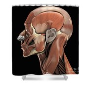 Muscles Of The Head Shower Curtain