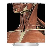 Muscles Of The Upper Chest And Neck Shower Curtain