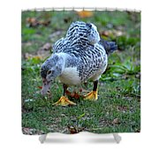 Muscovy 14-6 Shower Curtain