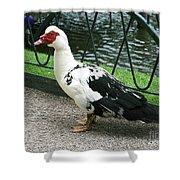 Muscovy Duck In Tivoli Gardens Shower Curtain