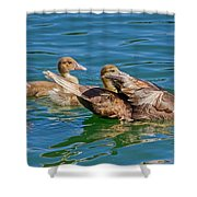 Muscovy Family Shower Curtain