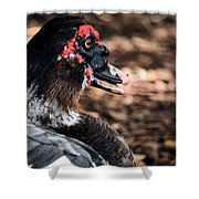 Muscovy Feathers Shower Curtain