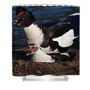 Muscovy Lovers Shower Curtain