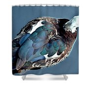 Muscovy Plummage Shower Curtain