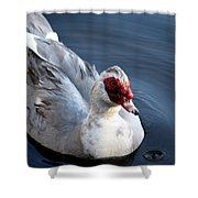 Muscovy Study 2013 Shower Curtain