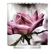 Museum Park Pink Rose Shower Curtain