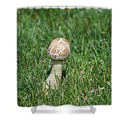 Mushroom 01 Shower Curtain