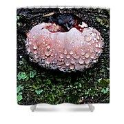 Mushroom 1 Shower Curtain