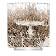 Mushroom 4 Shower Curtain