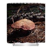 Mushroom And Pine Cone Shower Curtain