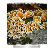 Mushroom Clusters Shower Curtain