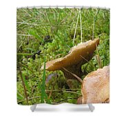 Mushroom In Grass Shower Curtain
