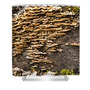Mushroom Log Shower Curtain