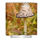 Shaggy Mane Mushroom Shower Curtain