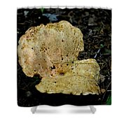 Mushroom Supreme Shower Curtain