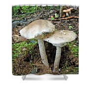 Mushroom Twins - All Grown Up Shower Curtain