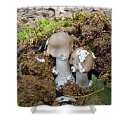 Mushroom Twins - As Youngsters Shower Curtain