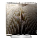 Mushroom With Watercolor Effect 4 Shower Curtain
