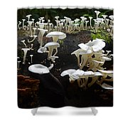 Mushrooms Amazon Jungle Brazil 5 Shower Curtain