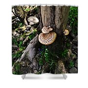 Mushrooms And Flowers Shower Curtain