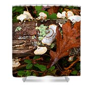Mushrooms And Leaf Shower Curtain