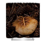 Mushrooms And Pine Combs   #3659 Shower Curtain