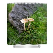 Mushrooms In Grass Shower Curtain