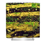 Mushrooms Lichen And Moss On Log Shower Curtain