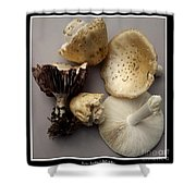 Mushrooms With Watercolor Effect 5 Shower Curtain