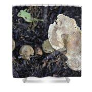 Mushy Mushrooms Shower Curtain