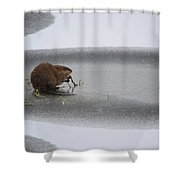 Muskrat Meal On Ice Shower Curtain