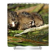 Muskrat Trio Shower Curtain