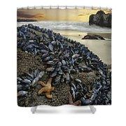Mussel Beach Shower Curtain