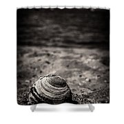 Mussel On The Beach Shower Curtain