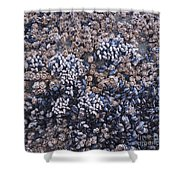 Mussels And Barnacles, Low Tide Shower Curtain