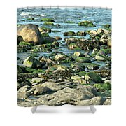 Mussels And Moss Shower Curtain