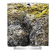 Mussels Barnacles Seaweed Closeup Shower Curtain