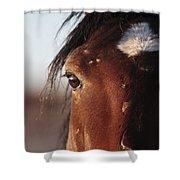 Mustang Battle Wounds Shower Curtain
