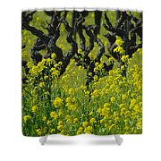Mustard And Old Vines Shower Curtain