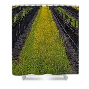 Mustard Grass In Vineyards Shower Curtain