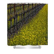 Mustrad Grass In The Vineyards Shower Curtain by Garry Gay