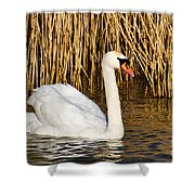 Mute Swan By Reed Beds Shower Curtain
